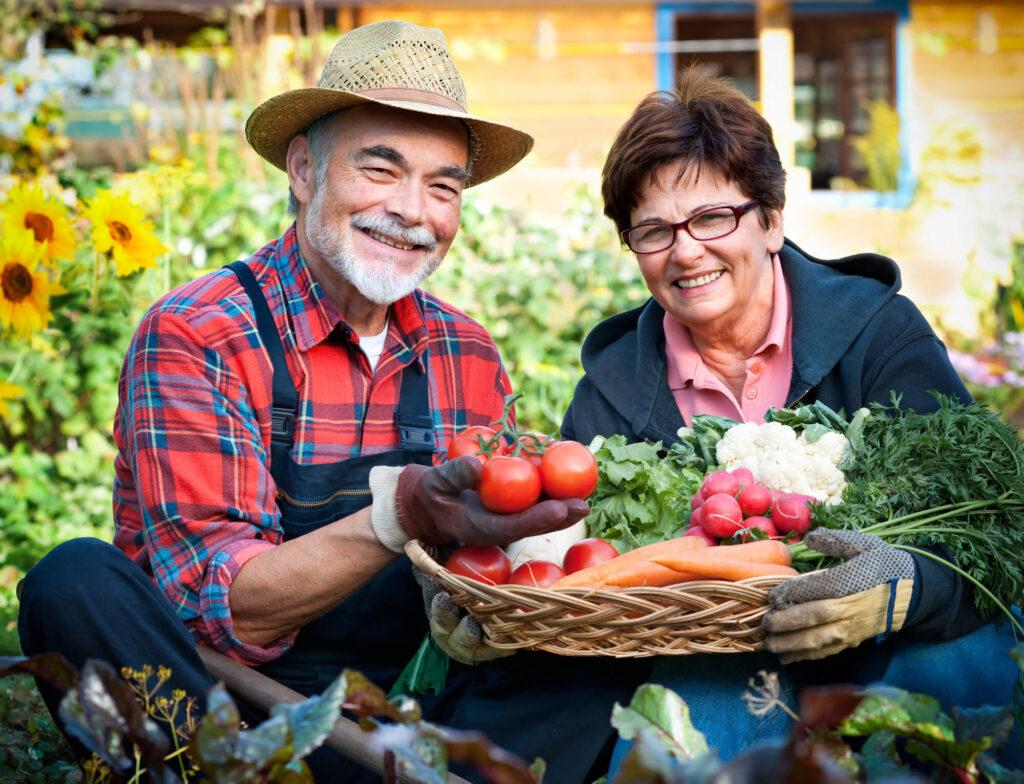 Senior farmers couple